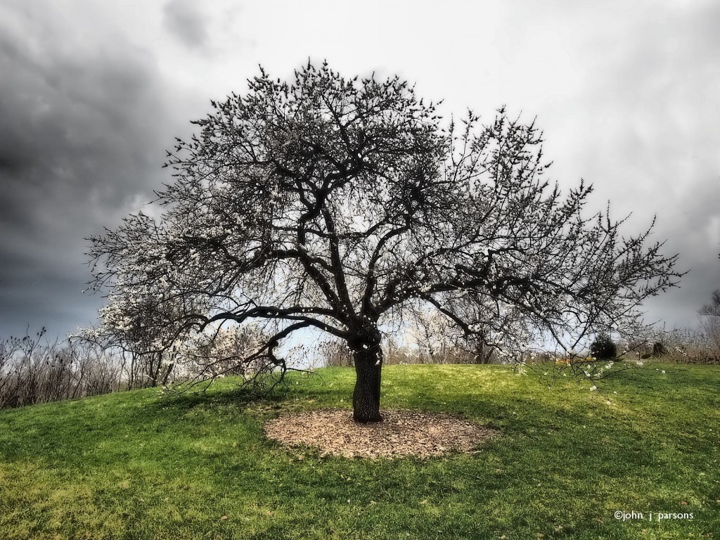 treeedge