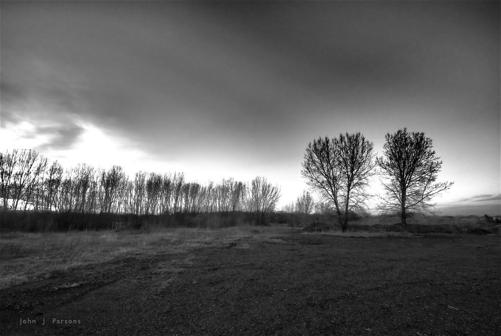 tenebroustrees